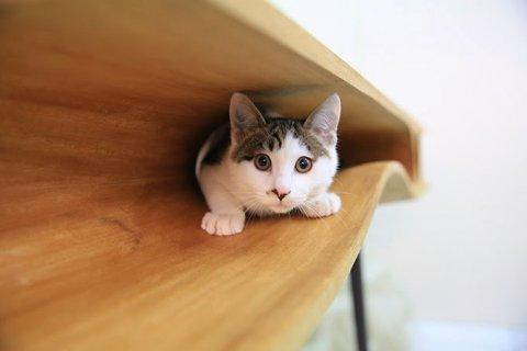愛猫家は必ず欲しがる!猫も嬉しいテーブルの写真2